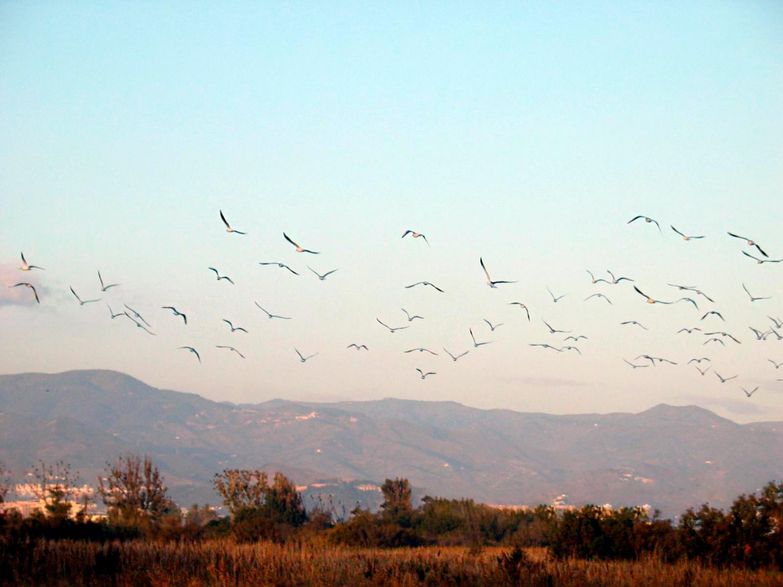 Planes para disfrutar en Málaga este otoño